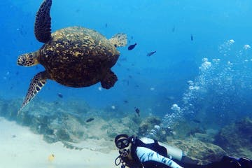 girl scuba diving with a turtle in Waikiki Oahu