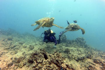 girl learning to scuba dive in Honolulu Hawaii with Pure aloha adventures while 2 turtles swim nearby