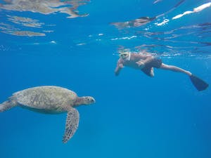 gentleman snorkeling with a giant sea turtle in Honolulu Hawaii