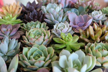 Different variety of succulents plants