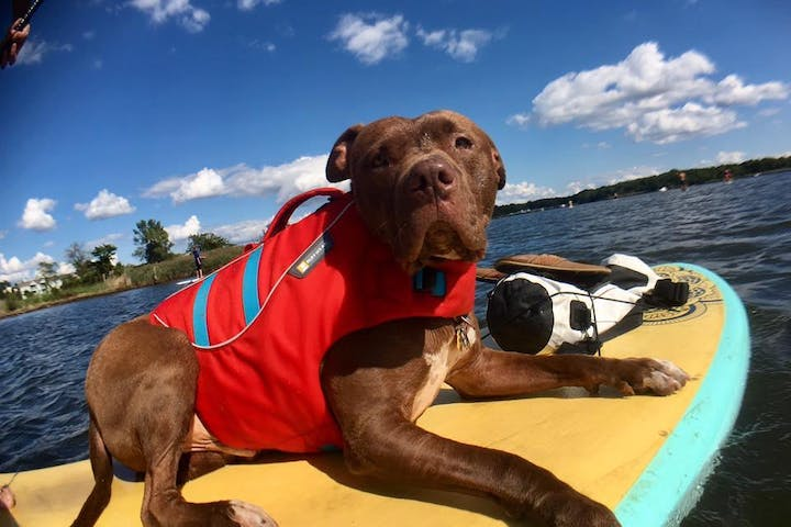 Stand up paddle boarding with dog in baltimore