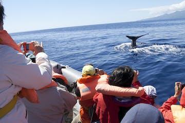 Observação de Cetáceos