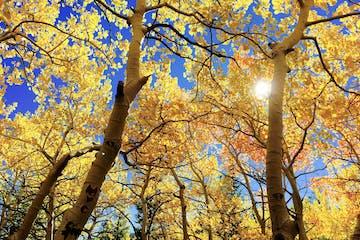 Fall Foliage on the Fall Foliage Tour
