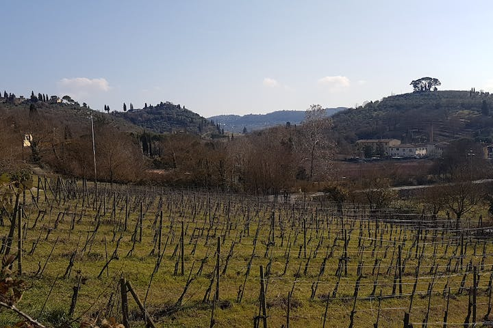 Villa Demidoff vineyards