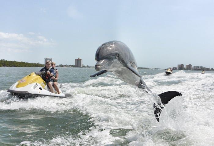 Naples Jet Ski Dolphin Tour Bonita