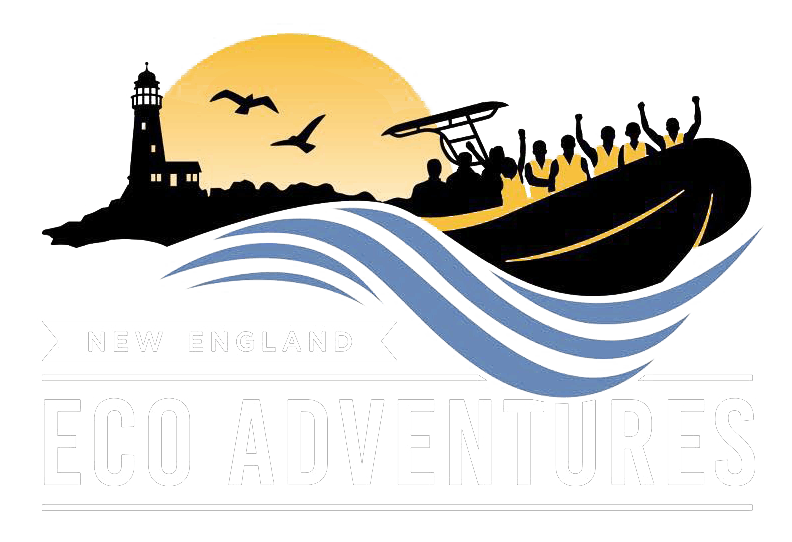 New England Eco Adventures