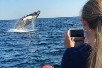 Up close with whales - whale watching tours in Kennebunk, ME
