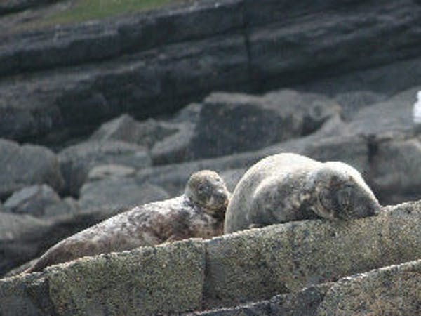 two seals lying on the rocks in the sun