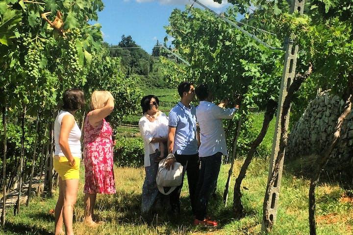 Amarone's vineyard