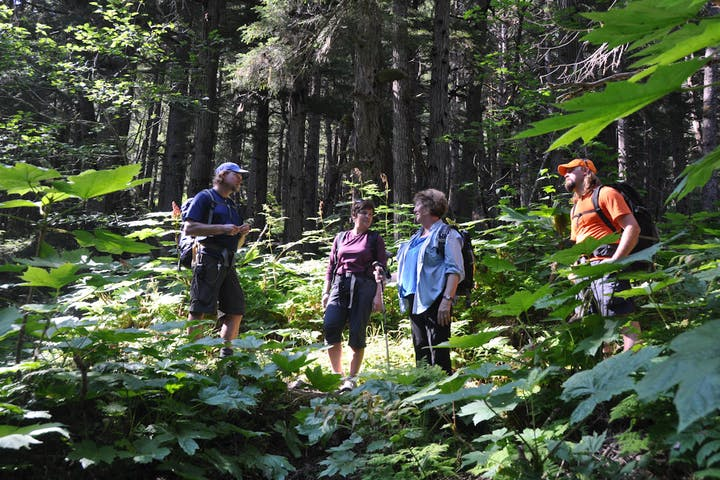 hikers stand in sunny area in forest