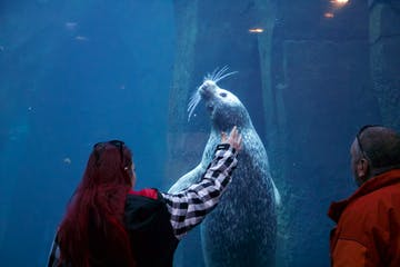 Woman putting hand out to sea lion tank