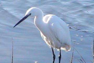 Close up of white bird
