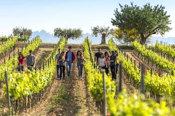 Hiking through vineyards in Catalonia