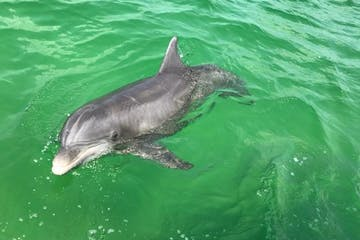 a dolphin swimming in a pool of water