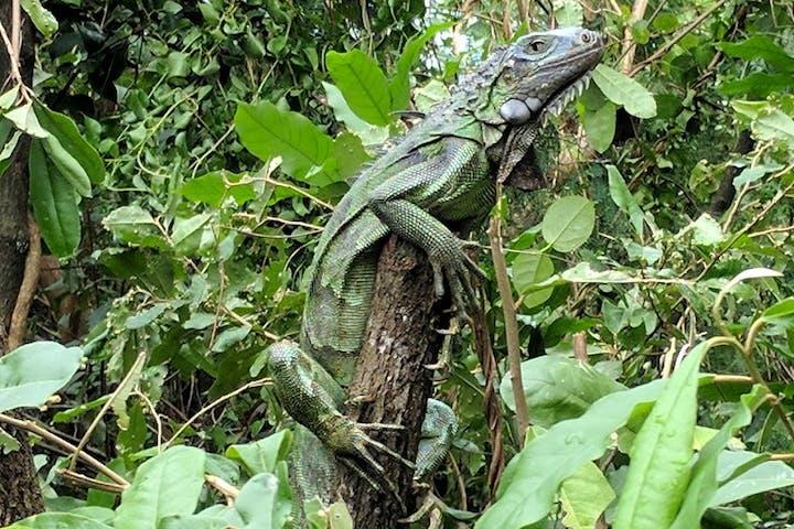 A lizard on a stick