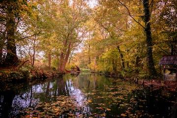 Foto vom Fluss und den Bäumen mit gelben Blättern im Herbst
