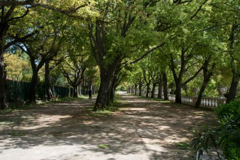 Garden da Tapada das Necessidades Lisbon