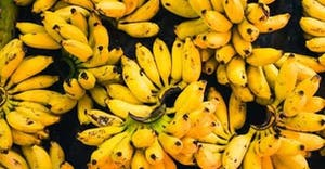 a bunch of bananas and other fruit