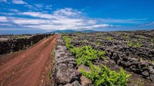 wines Portuguese islands - Azores Pico vineyards