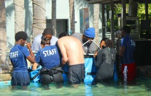 coral world shark release