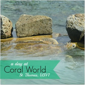 coral world a day