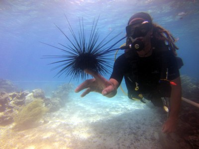 coral world urchin