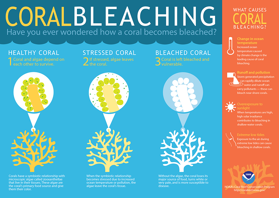 Coral world coral-bleaching