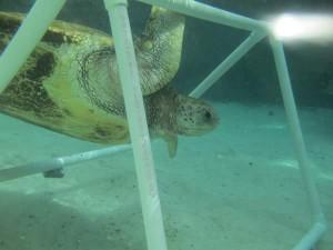 Coral World enrichment 1