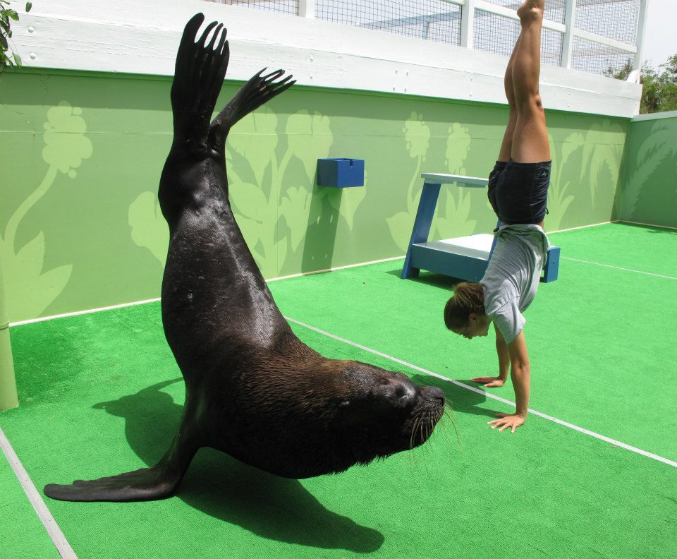 Coral World Sea Lion Team