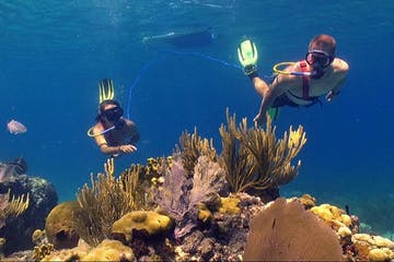 A group of people SNUBA diving at Coral World Ocean Park