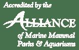 AMMPA Accredited logo
