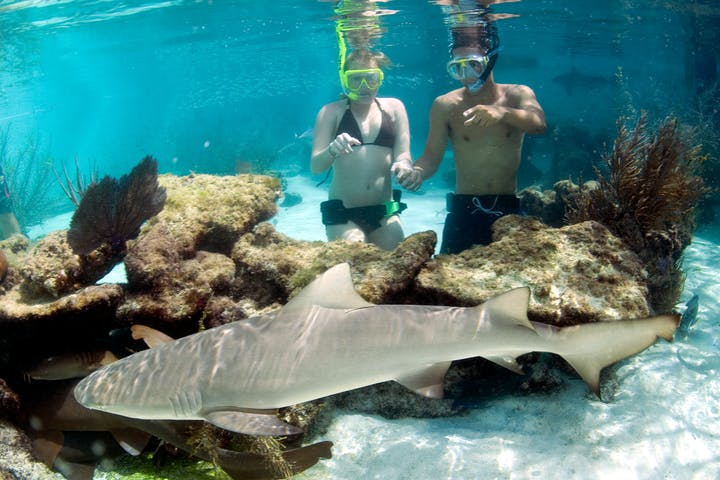 A group of Coral World visitors observe a shark underwater
