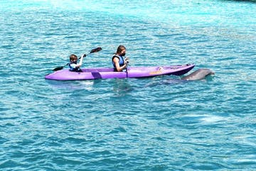 two kids on a kayak near a dolphin