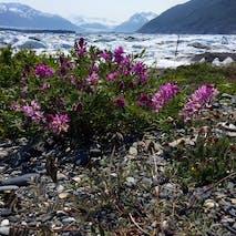 Explore the flora and geography on an Alaska ATV tour