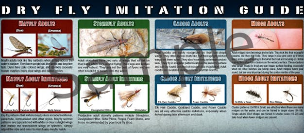Dry Fly Fishing Guide
