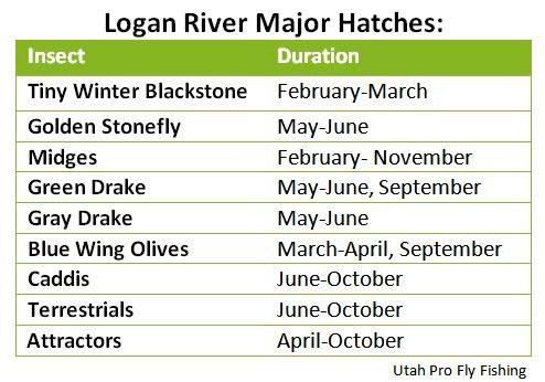 Logan River Major Hatches