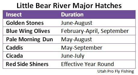 Little Bear River Major Hatches