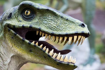 a close up of a dinosaur