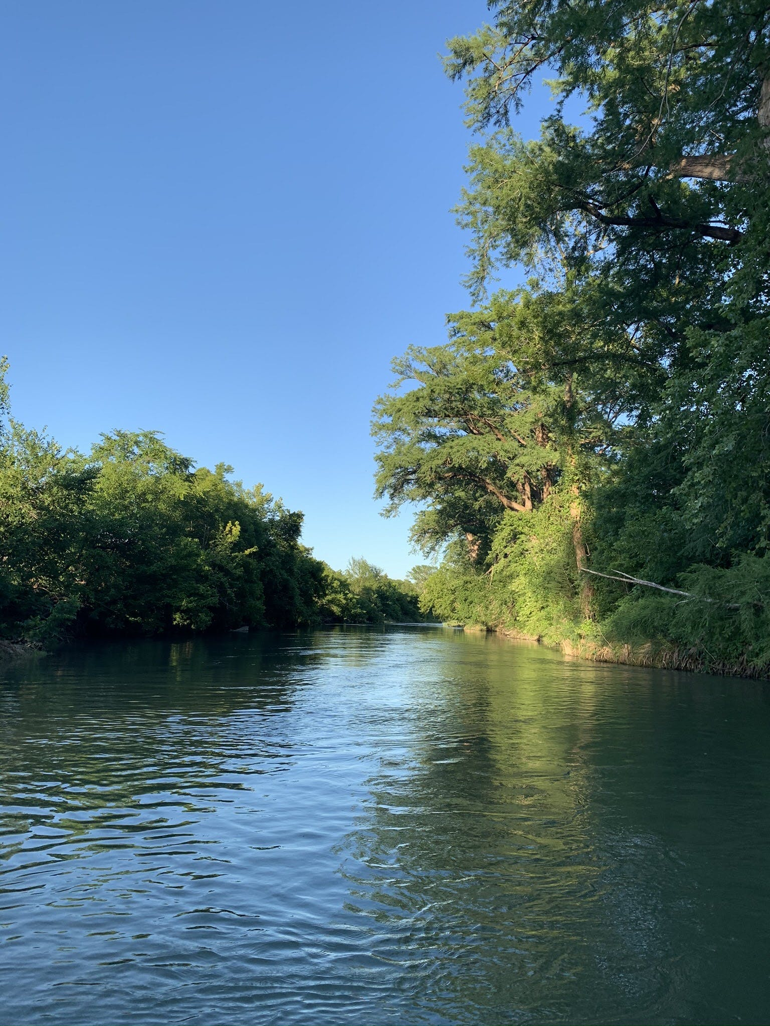 a body of water with trees in the background