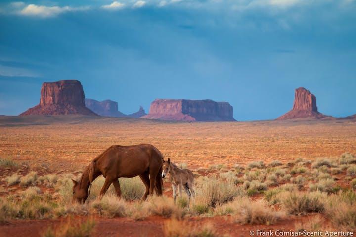 Horses ina field