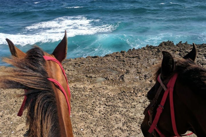 Two horses looking at the ocean