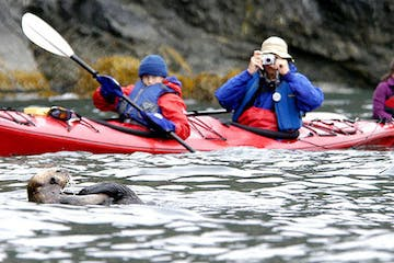 kayakers taking picture of otter