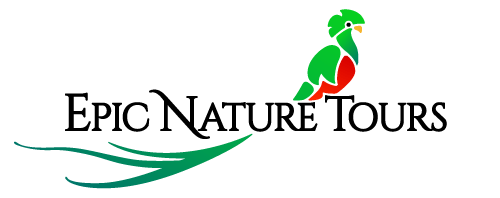 Black River Outdoors Guides Travel To Costa Rica | Black