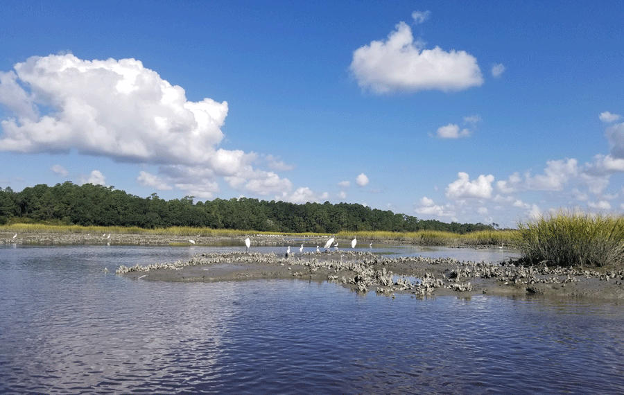 Wading Birds on Sandbar