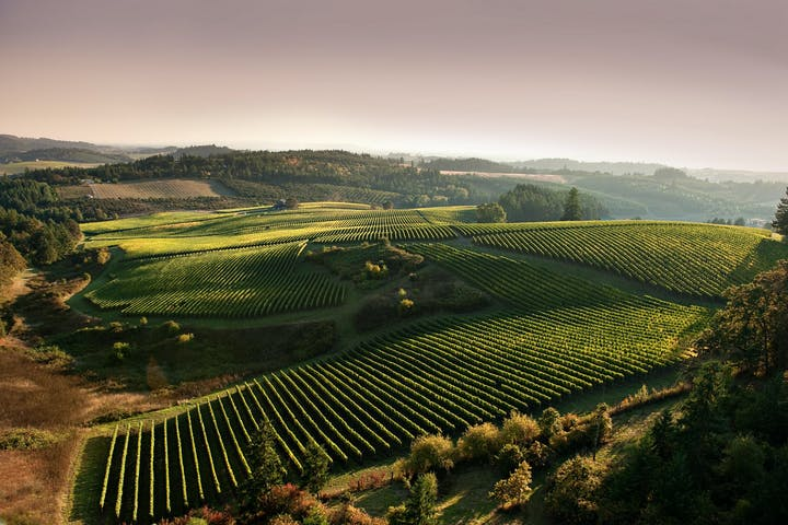 View of Willamette Valley vineyards