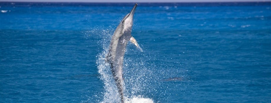 fish dolphin art