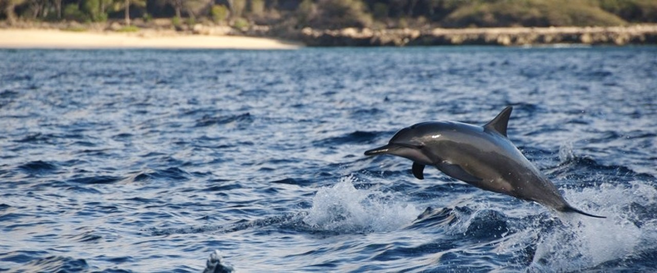 Spinner Dolphins Dolphin Excursions