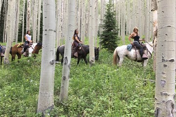 Horses riding through the forest