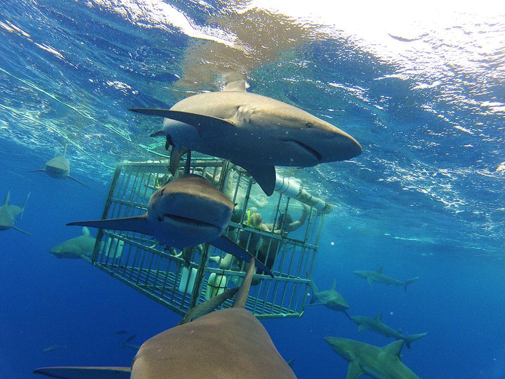 sharktour-02