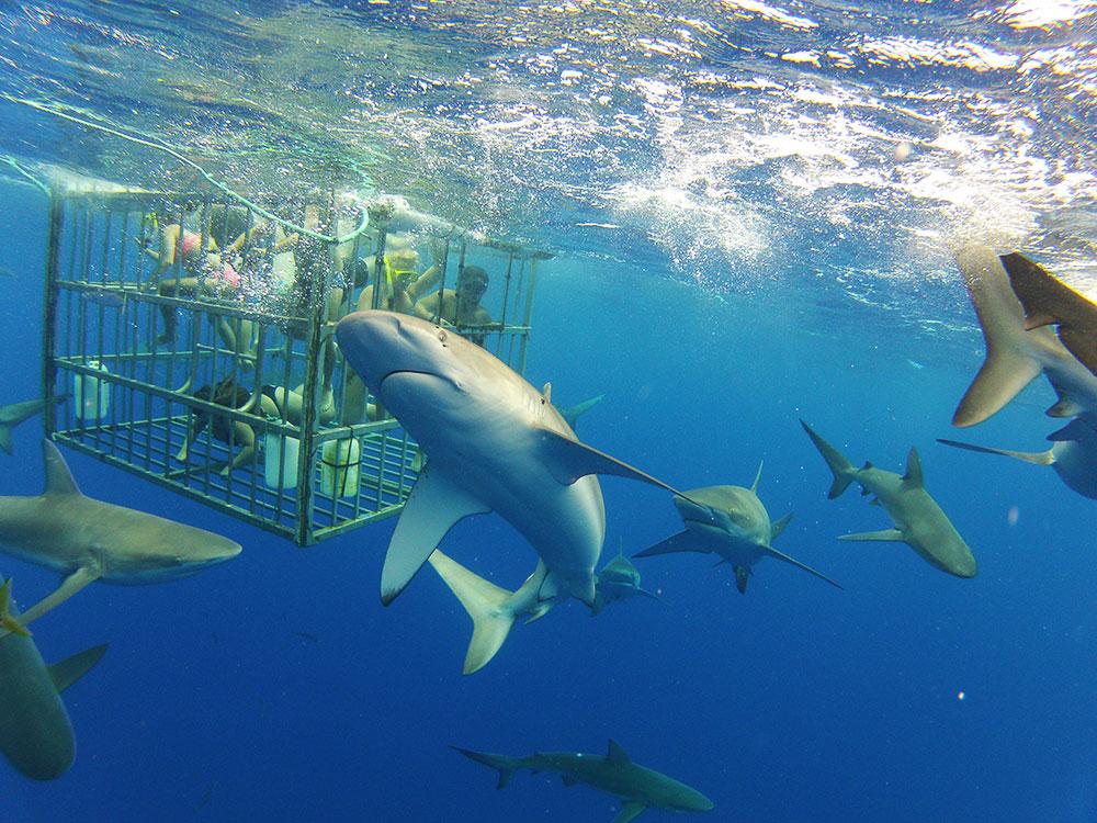 sharktour-01
